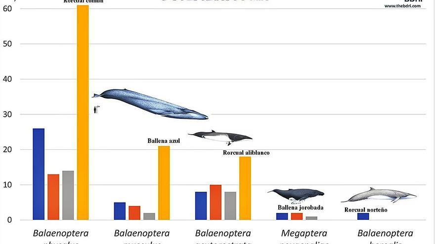 El BDRI alcanza el centenar de avistamientos de ballenas estudiados en aguas de las Rías Baixas