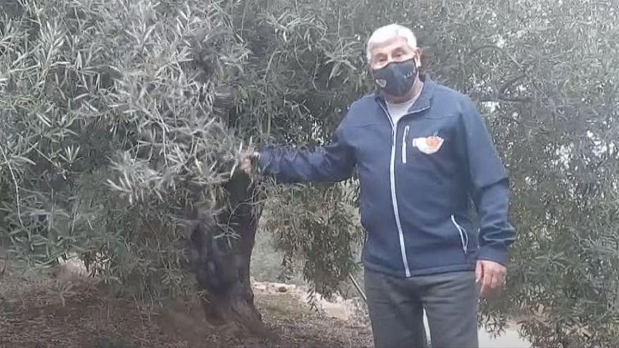 'La Nostra Agricultura' sale en defensa del olivar tradicional de Castellón