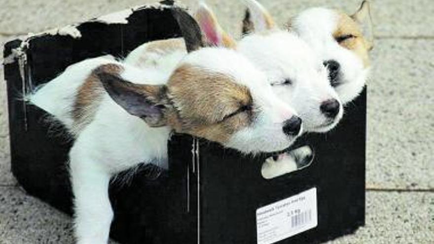 Encontré unos cachorros en la basura y mi perra los cuida