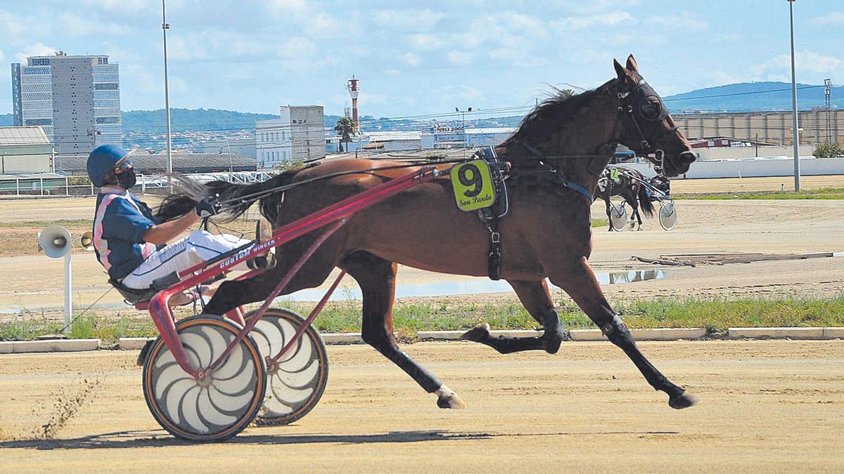 Fantasía d'Escandol es una de las candidatas al triunfo en la reservada para amateurs.