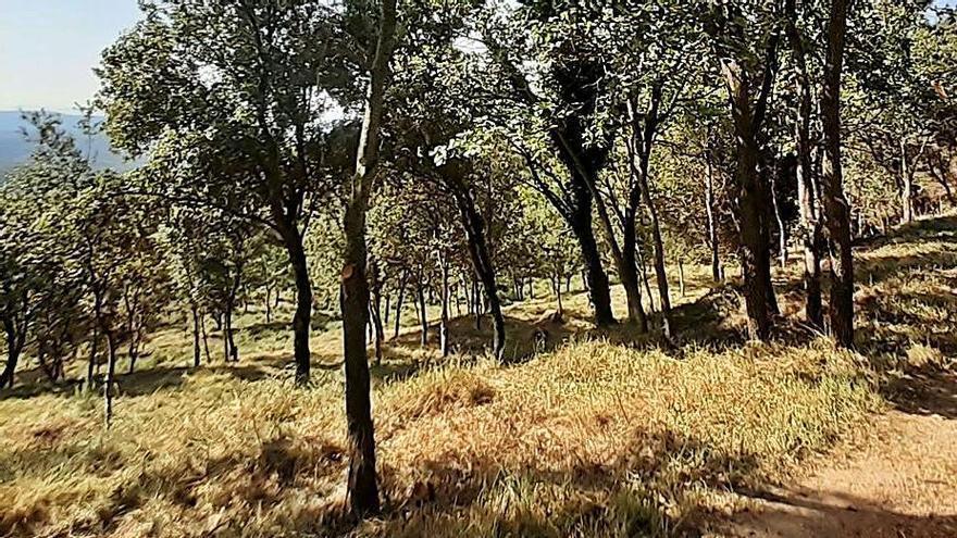 La Diputació vol recuperar zones de pastura al Berguedà per prevenir incendis al bosc