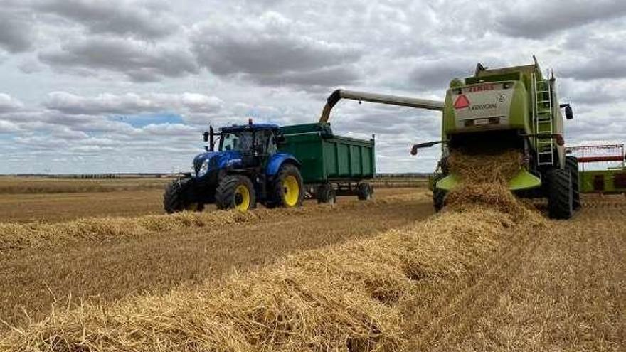 Lonja de Zamora: trigo, cebada y centeno disparan precios