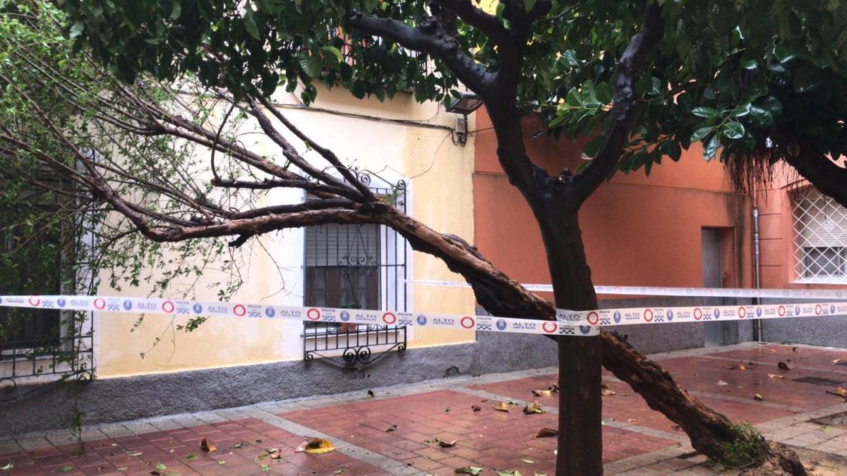 Las fuertes lluvias provocan caída de arbolado y ramas en Murcia