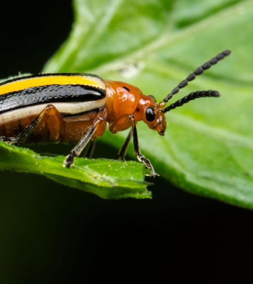 Descubren que las plantas 'planifican' su lucha contra los insectos