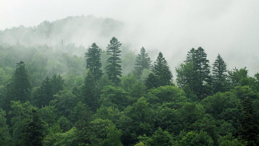 La vegetación empieza a saturarse del exceso de CO2