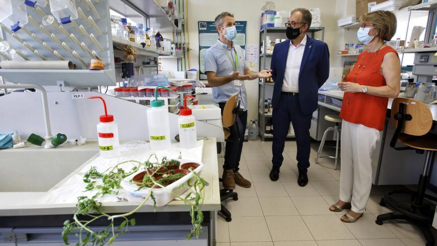 Diputación y la UJI suman esfuerzos para combatir las plagas en los cultivos de Castellón