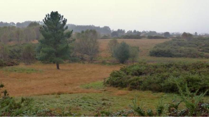 Los terrenos de Collazo en Aranga, del 'bum' industrial y residencial al eólico y forestal