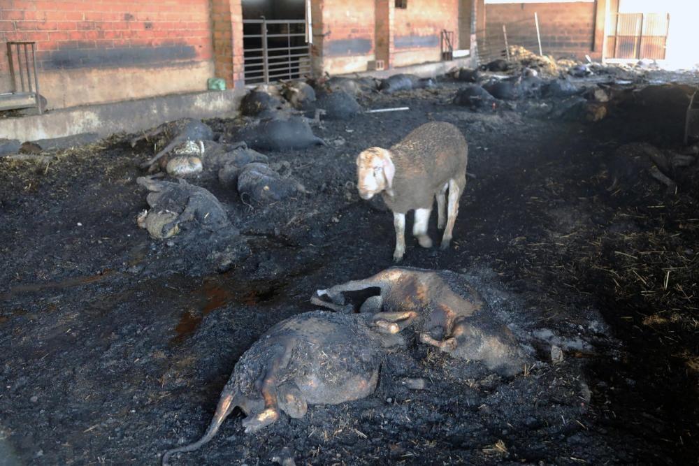 Las imágenes del incendio de Tarragona.