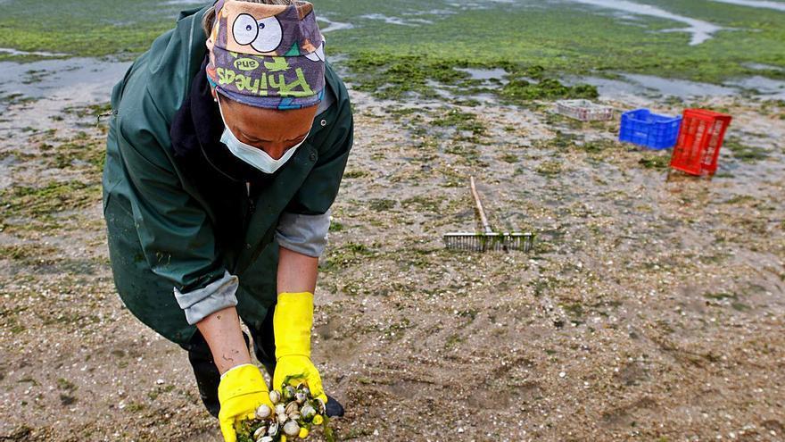 Refuerzos por tierra y mar se suman a la lucha contra la plaga de algas de la playa Compostela