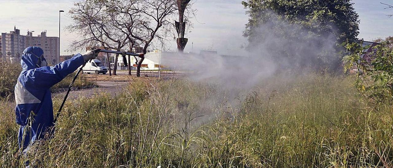 El intenso calor provoca una gran eclosión de larvas de mosquito tigre