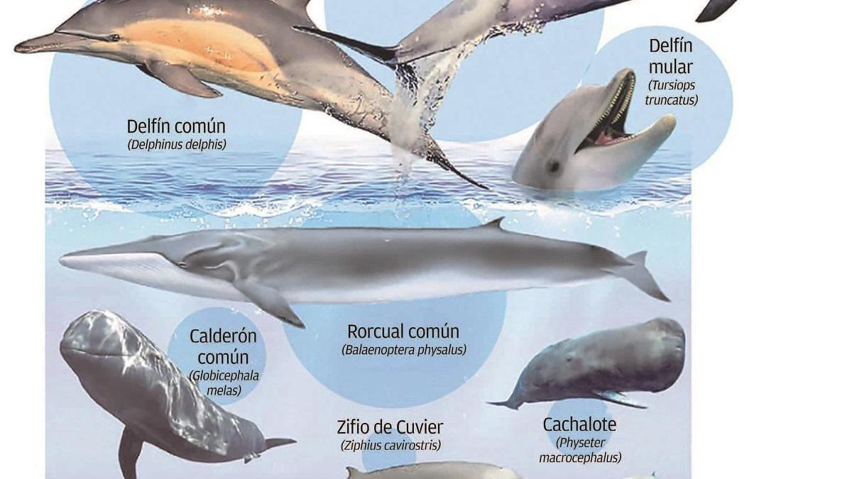 El cambio del clima intensifica la presión sobre los cetáceos