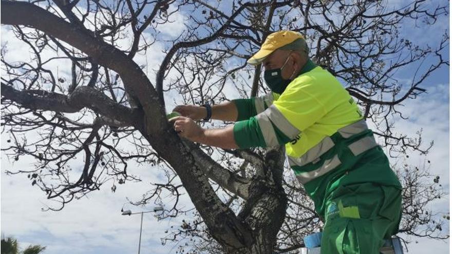 El Ayuntamiento de Alicante inicia la aplicación de tratamientos biológicos de control de plagas en zonas verdes