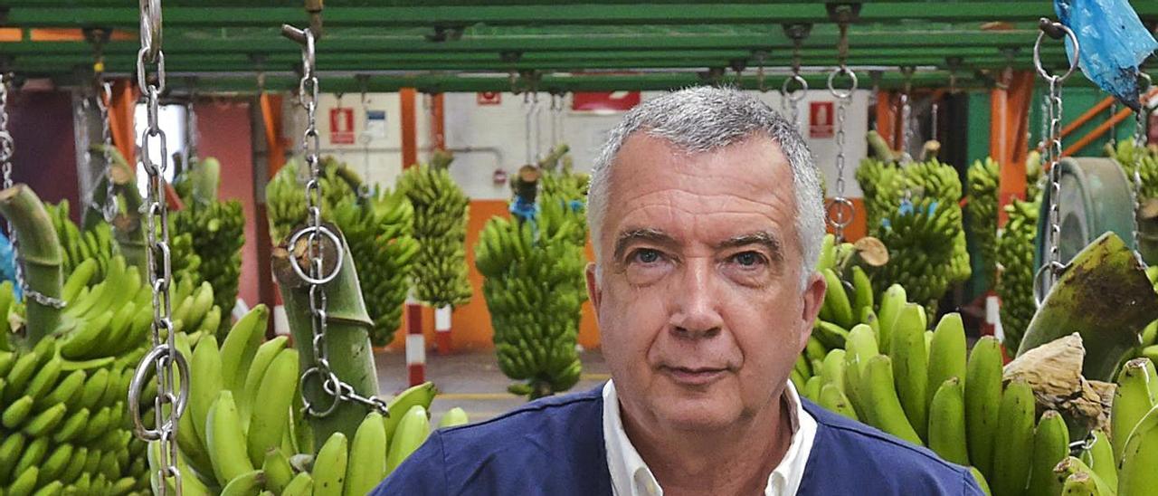 Ricardo Díaz, ayer, en la empaquetadora de la cooperativa Agrícola del Norte en Bañaderos, Arucas. | | ANDRÉS CRUZ
