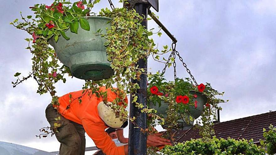 Mudan as xardineiras colgantes