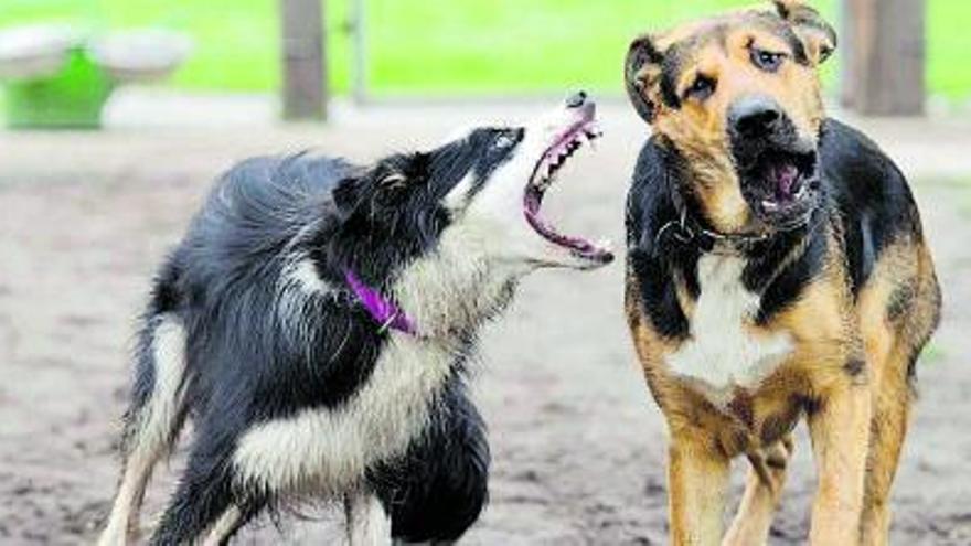 Dos perros muy peleones