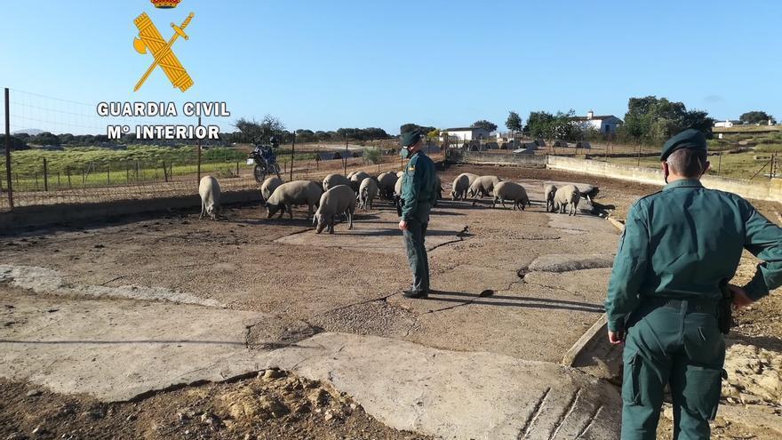 Investigan a cuatro personas por un delito de estafa en compra de ganado