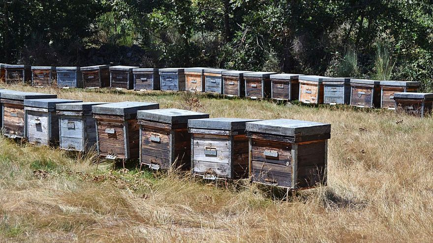 """Los apicultores trashumantes se defienden: """"Somos muy profesionales"""""""