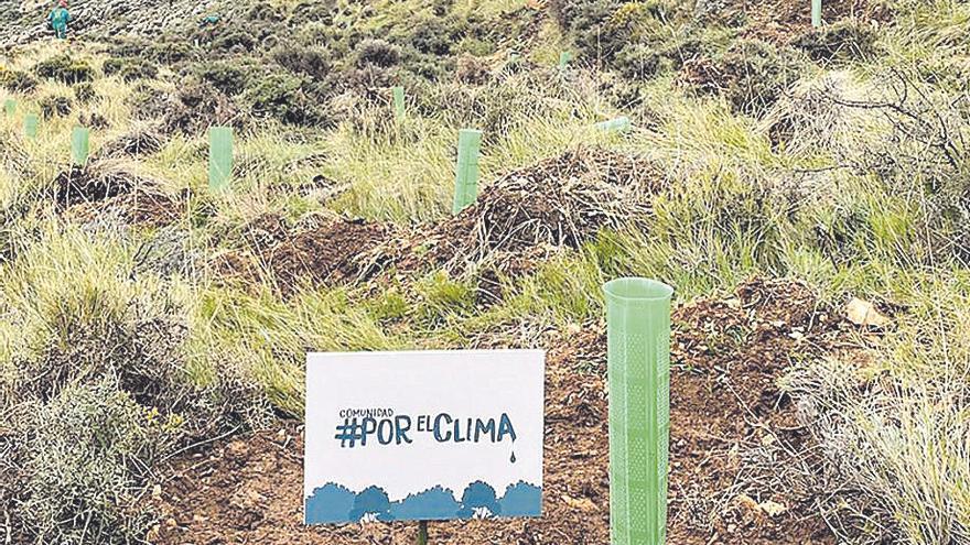 El municipio turolense de La Zoma plantará más de 16.000 árboles