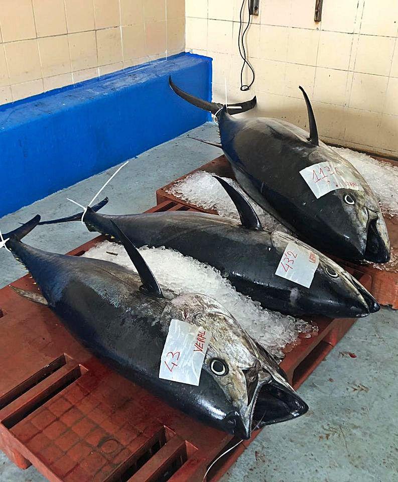 Atunes rojos acabados de pescar tras ser subastados en el interior de una lonja. |  Activos