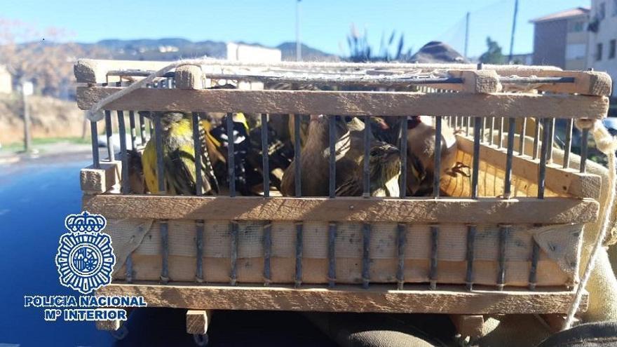 Dos detenidos con una veintena de aves capturadas ilegalmente y artes de caza prohibidas