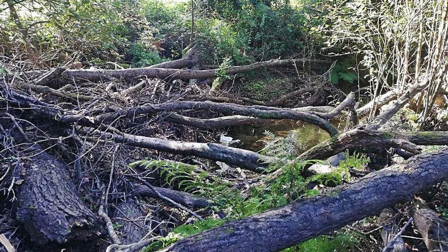 Móvete pide al Concello que inste a Medio Ambiente a retirar árboles del río Vea