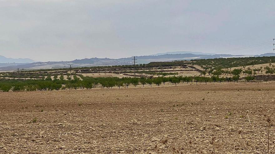 El boom de las fotovoltaicas alerta a los agricultores y dispara el precio del suelo en la Región