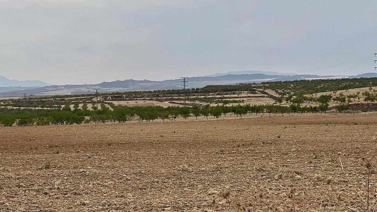 Terrenos agrícolas entre Mula y Fuente Librila, donde está proyectado una instalación para energía renovable. | MICAELA FERNÁNDEZ