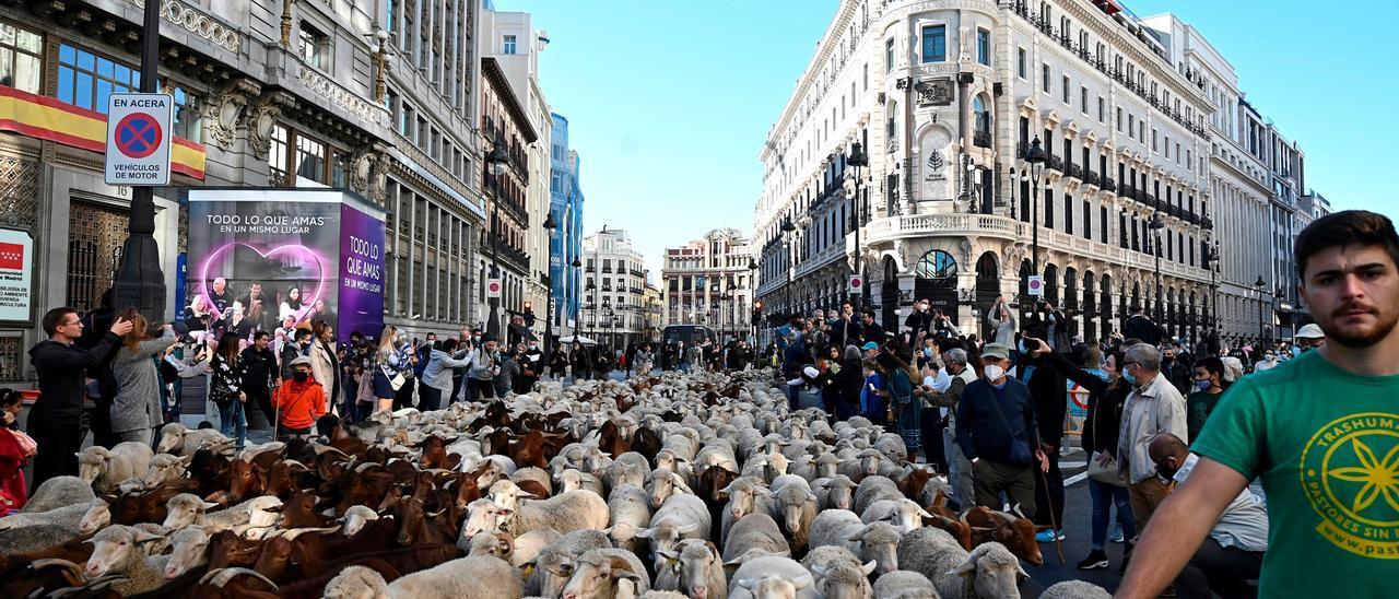 Las ovejas toman las calles de Madrid en la Fiesta de la Trashumancia
