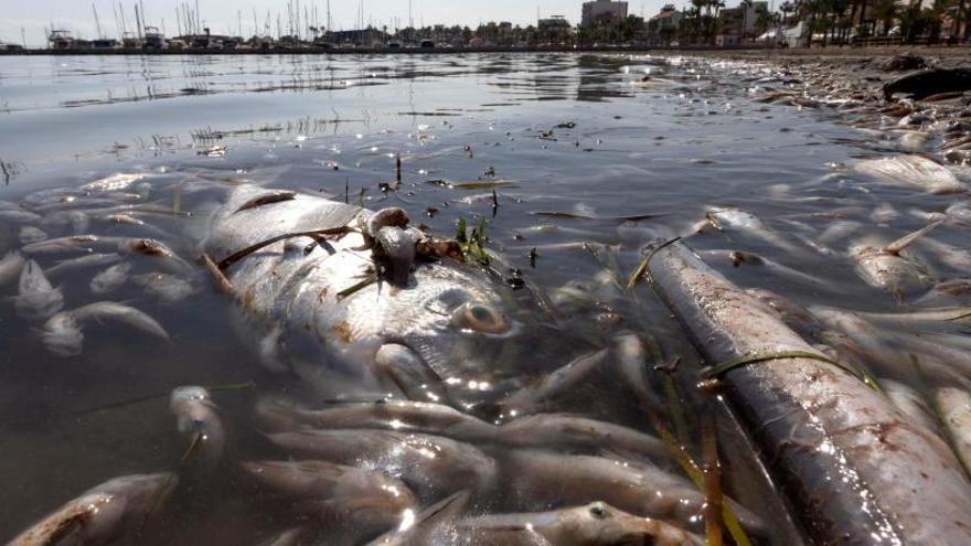 Hallan miles de peces muertos en el Mar Menor