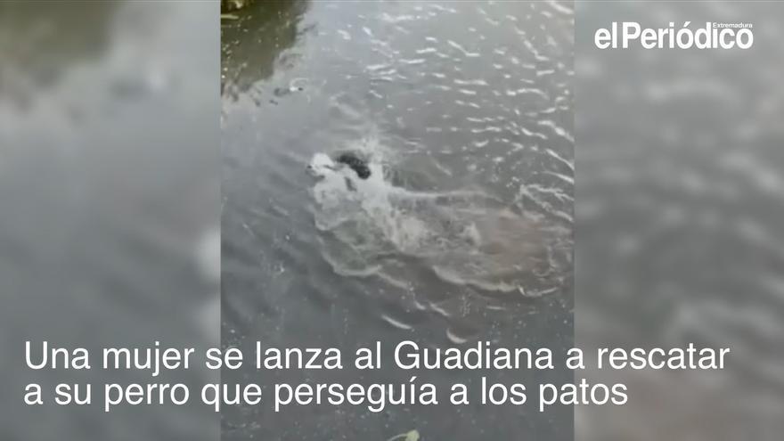 Una mujer se lanza al Guadiana a rescatar a su perro que perseguía a los patos
