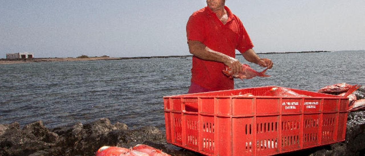Manuel García escamando pescado en las Salinas del Carmen.