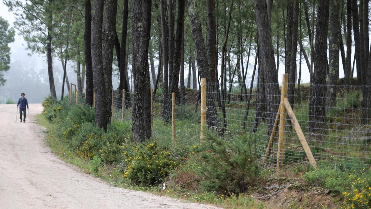 Cierres colocados en Zamáns (Vigo) por la consellería de Medio Rural para crear un escudo verde que permita combatir los incendios