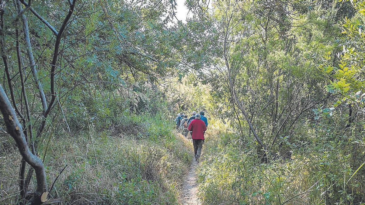 Camino en el Soto de Cantalobos.