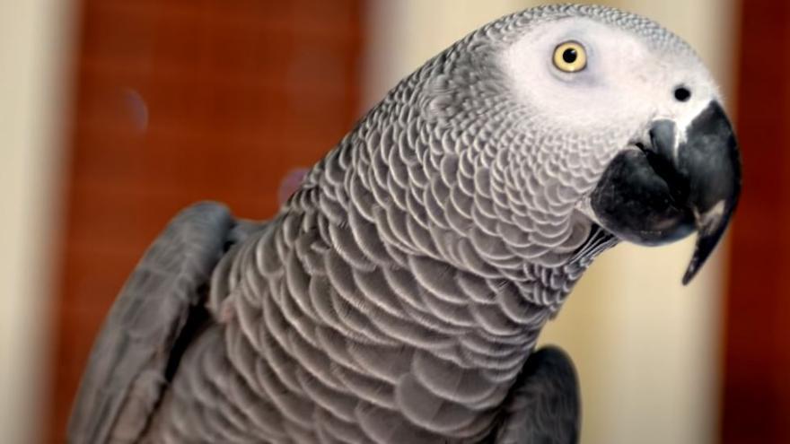 Un loro estadounidense perdido durante años vuelve a casa hablando español