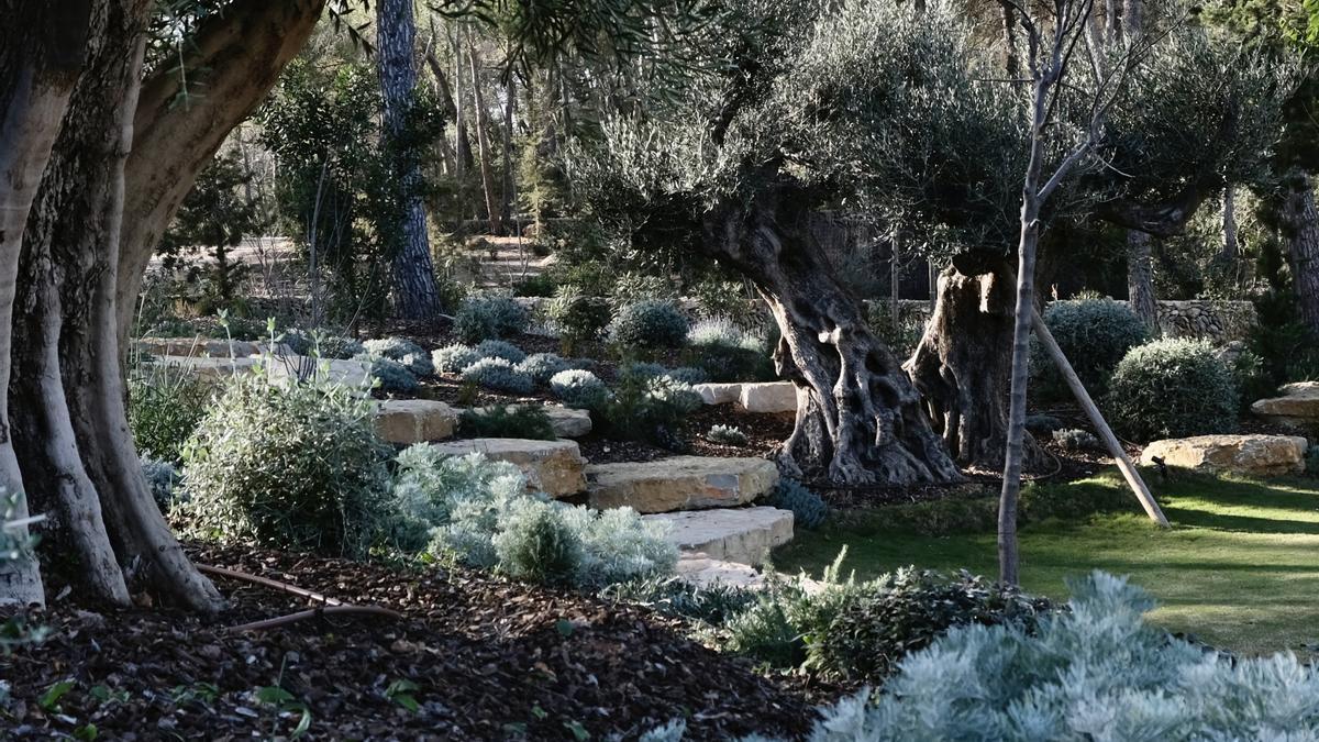 Proyectos de paisajismo que respetan y favorecen el ecosistema de Ibiza.