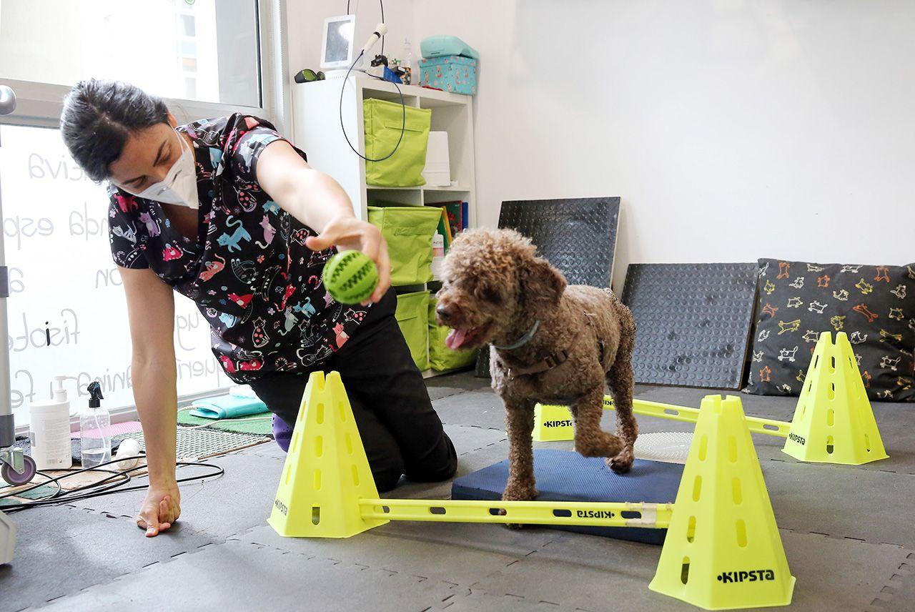 El tratamiento que recupera a Rafa Nadal llega a las mascotas