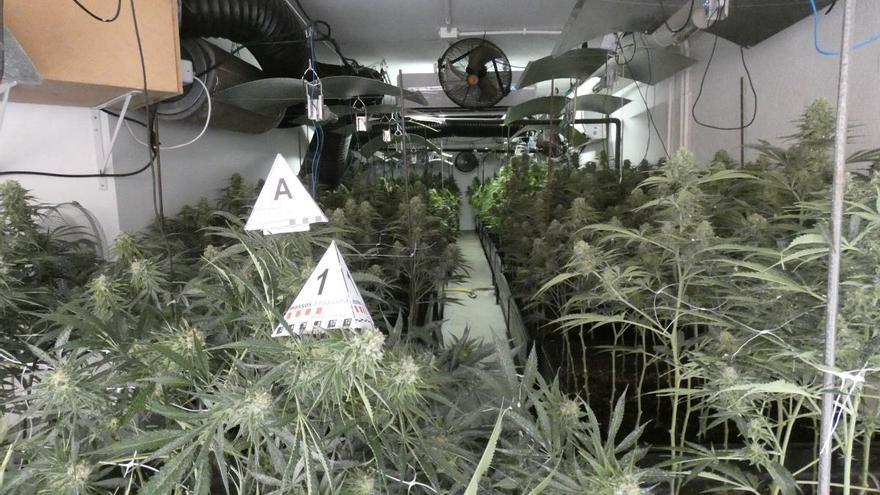 Detingudes quatre persones per cultivar marihuana en dos habitatges de l'Escala