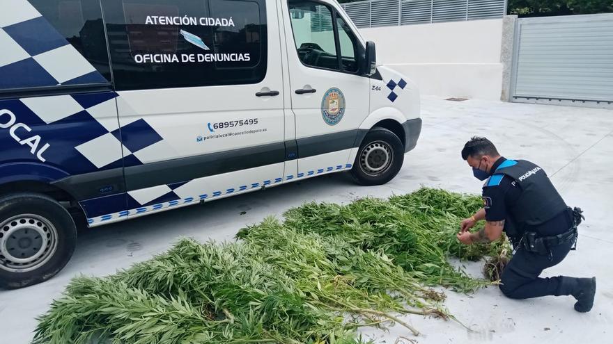 Investigado un vecino de Poio por una plantación ilegal de marihuana