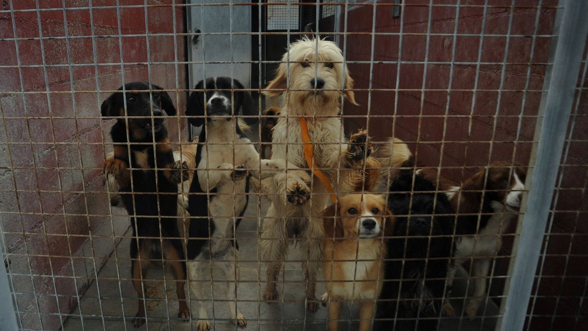 Perros en el CAAN.