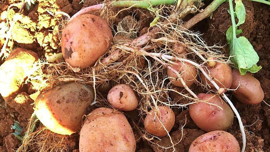 Sabores de verano: los productos estrella del campo ibicenco
