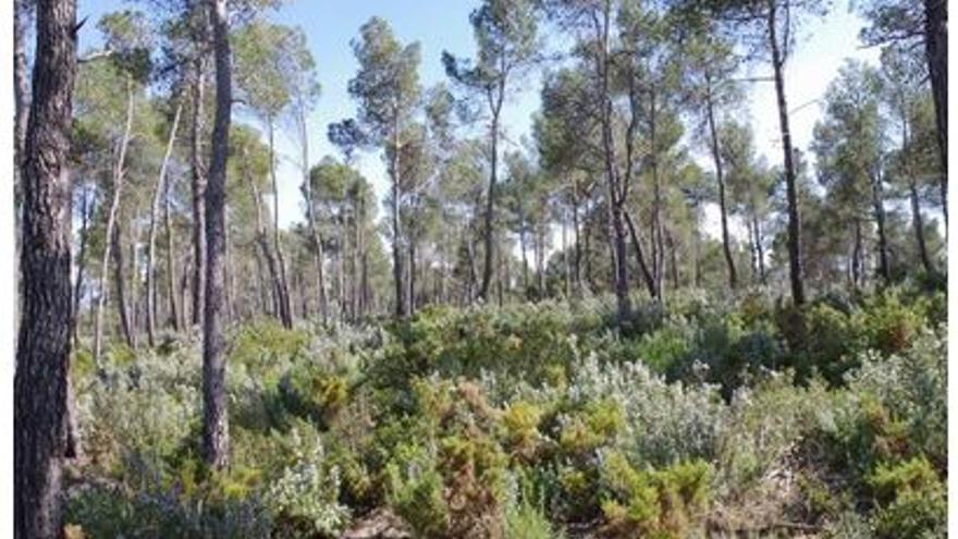Más de 1.300 parados trabajarán para prevenir incendios en los montes valencianos