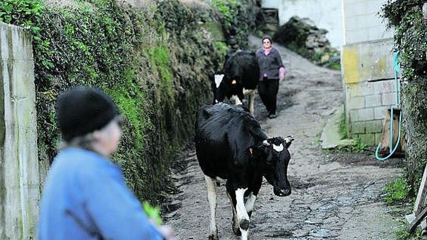 Coag reclama al Principado el pago de las ayudas agrarias europeas por la pandemia