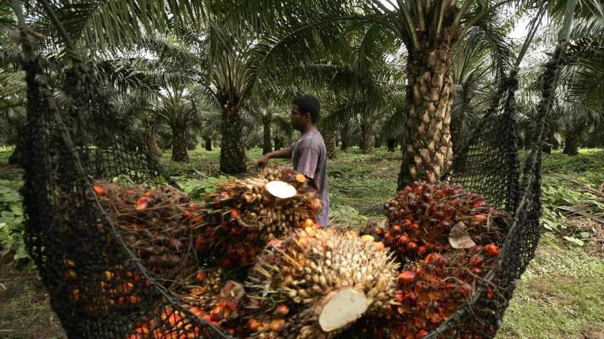 Los efectos nocivos de la grasa de palma son semejantes a cualquier grasa de origen animal