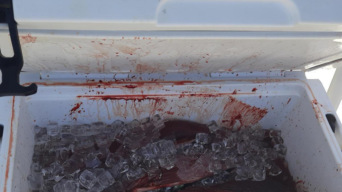 Imagen del cargamento de atún rojo incautado
