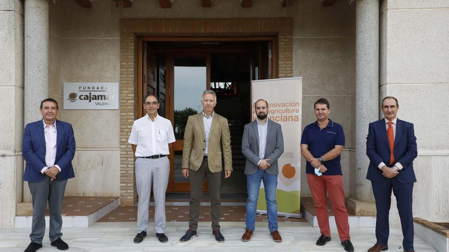 Ecoinnovación en la agricultura valenciana