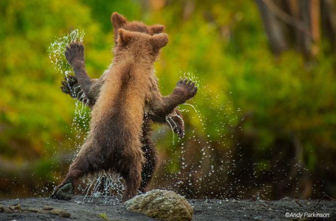 fotos-divertidas-animales-4.jpg