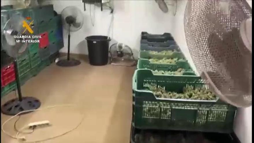 Cae en Granada una red criminal que distribuía grandes cantidades de marihuana por Europa