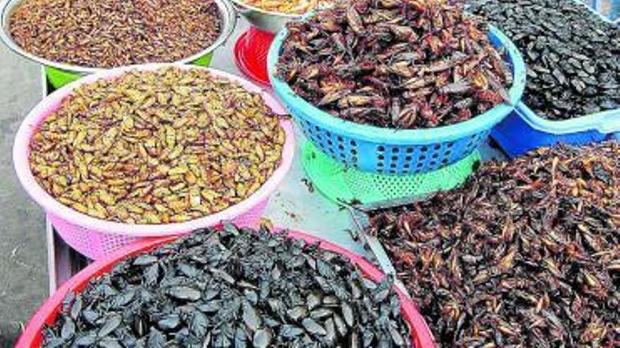 Los insectos  se incorporan a la dieta europea