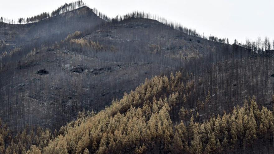 Los incendios arrasan en Canarias una de cada seis hectáreas quemadas en España