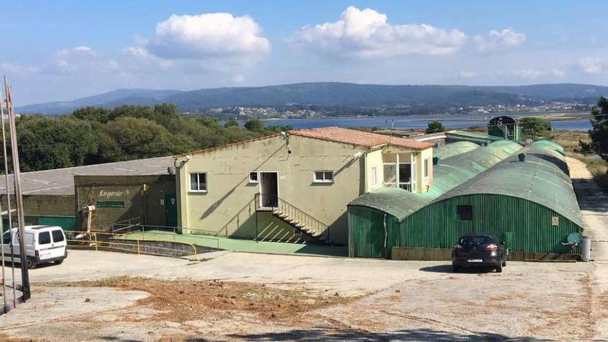 Pescanova transformará su planta de O Grove en un centro de I+D de cultivos acuícolas